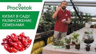 видео Садовод Центр - саженцы садовых деревьев и растений, товары для дачи