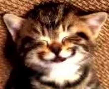 carte anniversaire chat qui chante chat chant joyeux anniversaire   YouTube