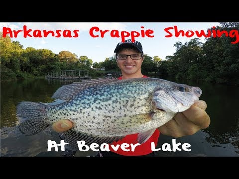 Crappie Fishing Arkansas Beaver Lake