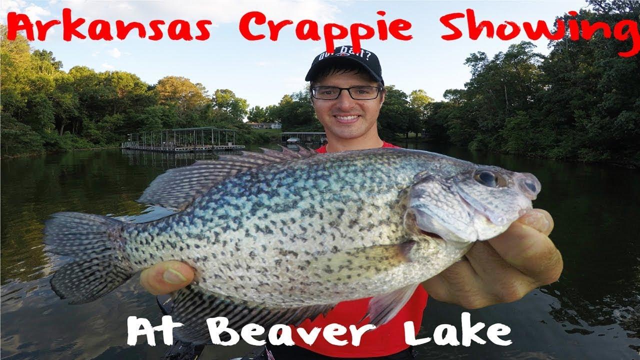 Crappie fishing arkansas beaver lake youtube for Fishing report arkansas