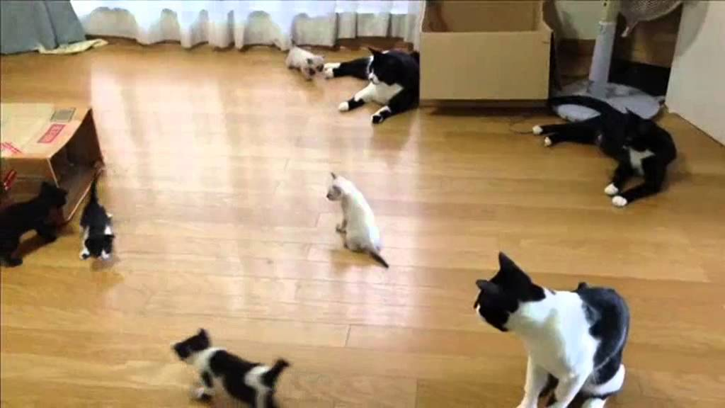 welcome to house full of cats
