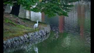 奈良・東大寺界隈での白鷺のスライドショーです。 BGMは松尾依里佳(Vn...