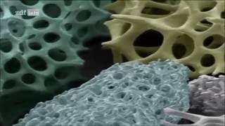 Die geheime Welt der Pflanzen (Superkräfte und Weltrekorde)