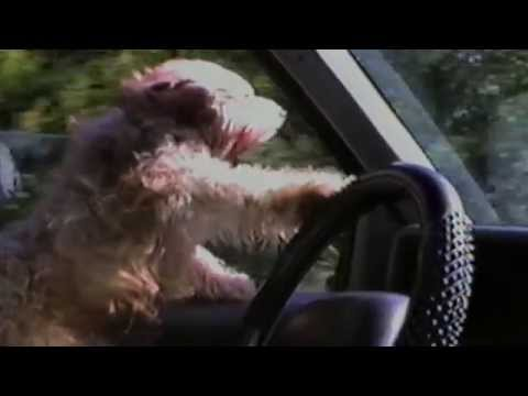 Dogs Who Can Drive - Compilation