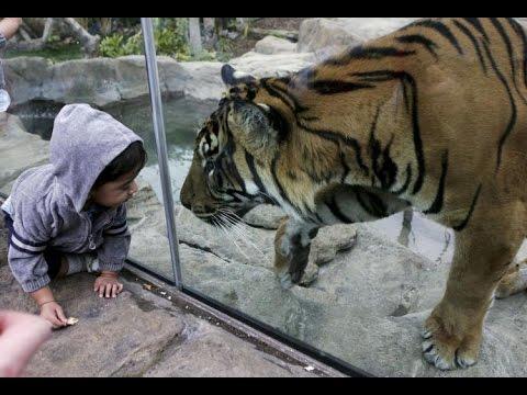 дети в зоопарке приколы с животными