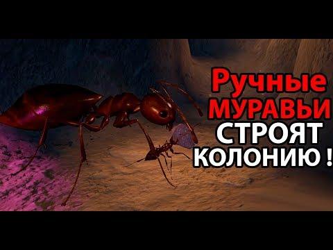 Познакомьтесь с моими ручными муравьями !