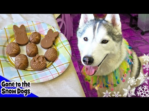 Easter Dog Treats Peanut Butter Carob Easter Eggs | DIY Dog Treats Recipe 97