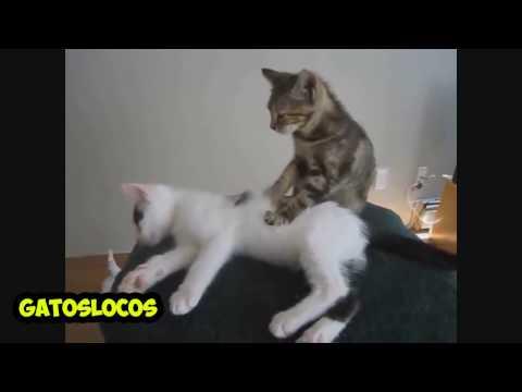 Los gatos mas graciosos del mundo!