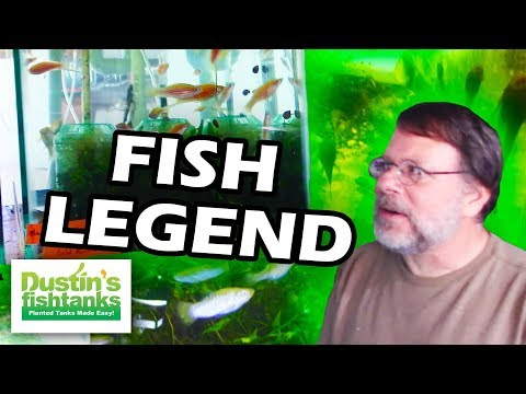 Livebearer Fish Legend  Greg Sage