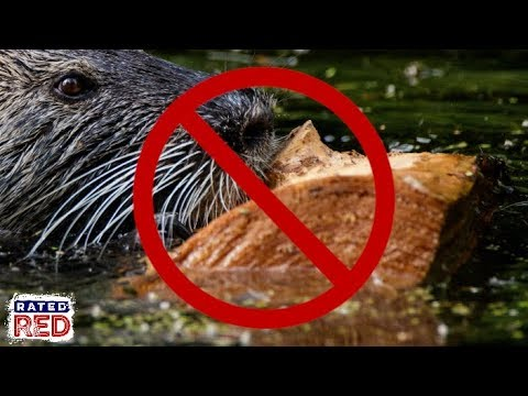 There's Some Serious Money To Be Made From Hunting Nutria Down In Louisiana
