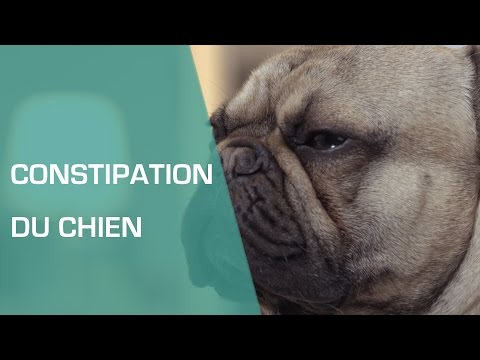 Constipation Du Chien Animaux Youtube