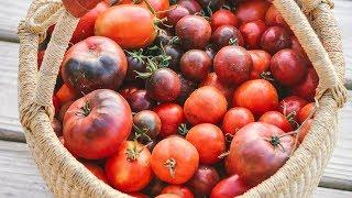 How to Freeze Tomatoes (NO peeling!)