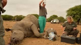 Rhino Poaching Scene In South Africa