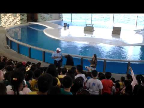 Sealion show2 at Ocean Adventure Park Subic
