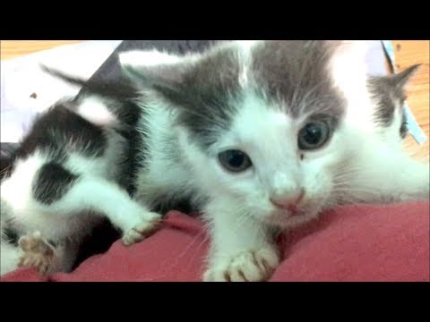 Sweet Kittens Turning Savage, Guess Who's A Boy? - Hope's Hospitalization