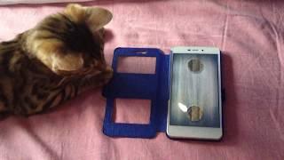 Бенгальский котёнок и приложение мышь на экране