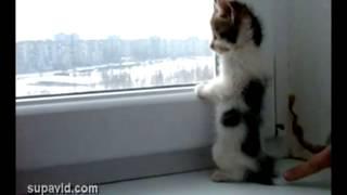 Трогательный маленький котенок смотрит в окно