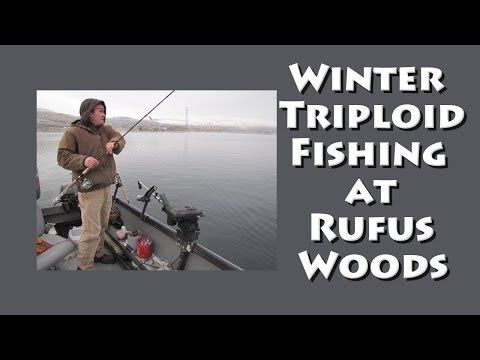 Winter Triploid Fishing At Rufus Woods
