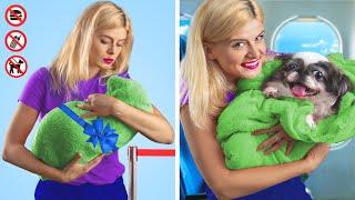 Как пронести домашних животных в самолёт