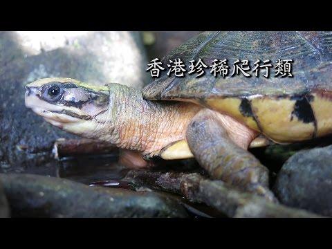 香港生物多樣性系列 - 香港珍稀爬行類