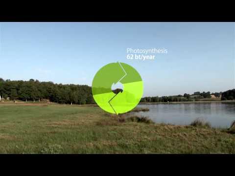 Renewable energies  the return of biomass