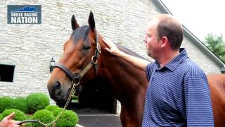 American Pharoah at Coolmore: One Year after Triple Crown Glory