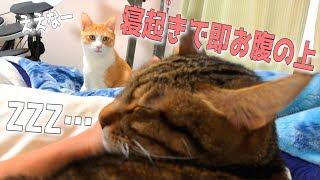 朝起きたらすぐに猫がお腹の上に乗っかってきました… thumbnail