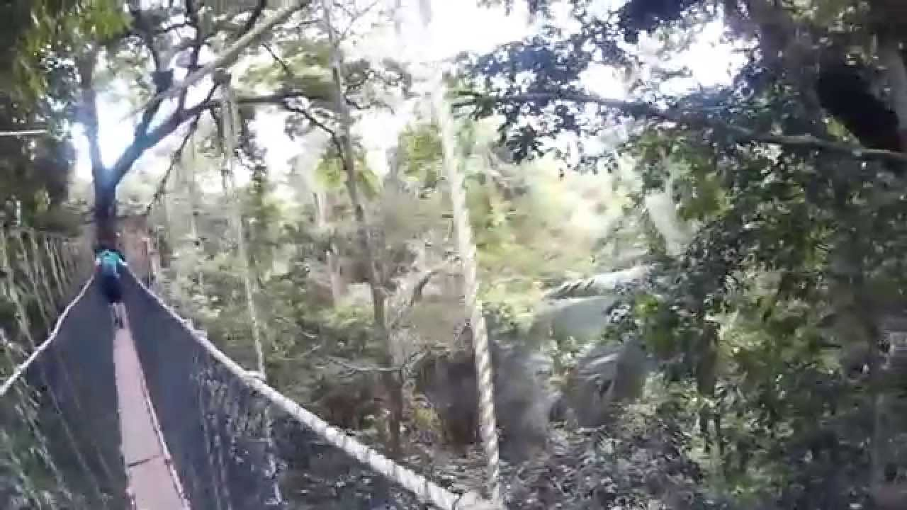 Jungle Canopy / Project Asia 2015 #malajziabautazok & Jungle Canopy / Project Asia 2015 #malajziabautazok - YouTube