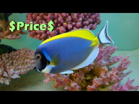 Big Size Marine Aquarium - Price & Parody