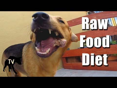 Raw Fed Rescue Dog | Raw Feeding Vlogs