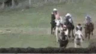 قصة حصان     A story of a horse
