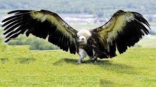 বিশ্বের সবচেয়ে ভয়ংকর ৫টি পাখি ! আপনি কল্পনা করতেও পারবেন না    Most Deadliest Animals in the world