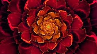 Chakra Meditation Music : Root Chakra Balancing & Healing Meditation Music