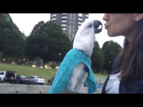 My cockatoo kisses to her fan😘😘😘😍😍😍❤️❤️❤️