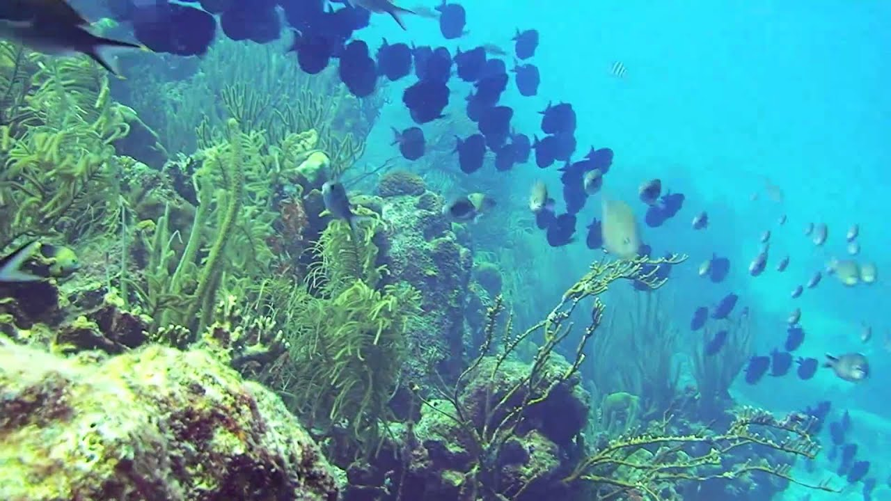 Scuba diving bonaire cliff hd dive site youtube - Porno dive hd ...
