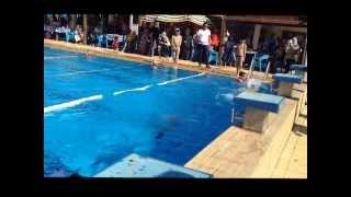 Omar Salah Dolphin Swimming Butterfly star 2 98% عمر صلاح سباحة فراشة النجمة الثانية