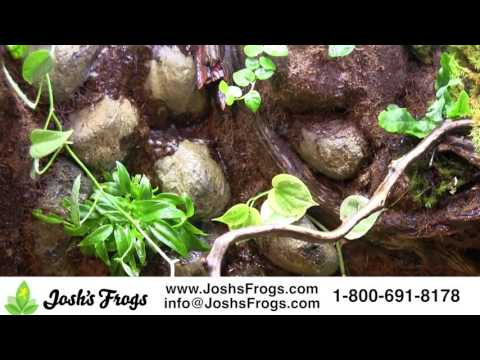 Josh's Frogs Vivarium Waterfall Background Kits