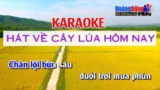 Hát Về Cây Lúa Hôm Nay Karaoke - Hát về cây lúa hôm nay Nhất Sinh Beat