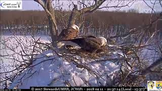 Valor1 and Starr, she squealing a lot - Trio Bald Eagles, ©SUMRR