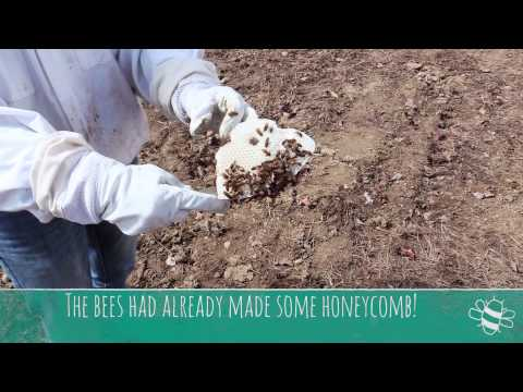 Bringing the Bees Back to Canterbury Shaker Village
