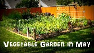 Tour Of Our May Vegetable Garden