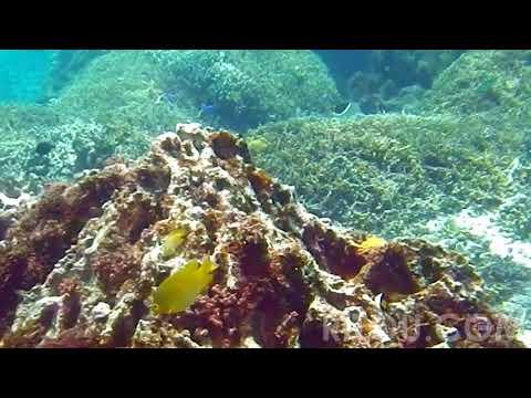 阿嘉島2014水中遊泳