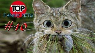 ПРИКОЛЫ 2019, ТОП СМЕШНЫХ ВИДЕО С КОТАМИ/Смешные животные/Смешные кошки/TOP FUNNY PETS #10