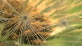 hölderlins sommer.