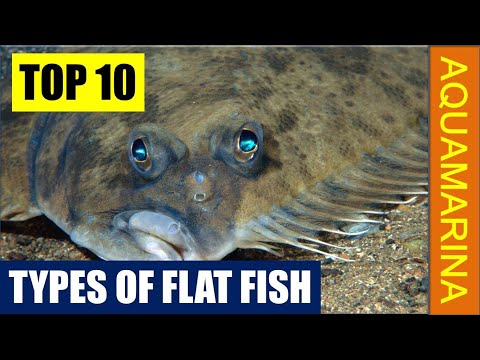 Types Of Flat Fishes (Top 10 Most Popular Varieties)