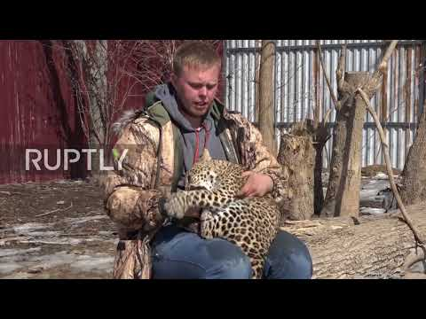 PAWFUL bond! Leopard and dog became BFFs at Vladivostok zoo