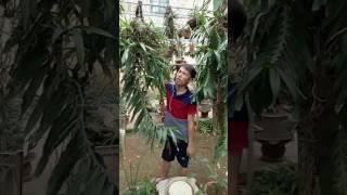 Phong lan rừng tam bảo sắc_tập tính và cách nuôi trồng