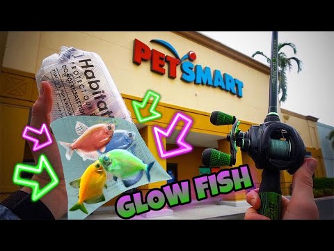 Fishing W/ LIVE GLOW FISH! (SURPRISE CATCH)