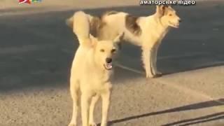 Объектив 23 07 18Зоозащитники заблокировали работу КП Центр защиты животных