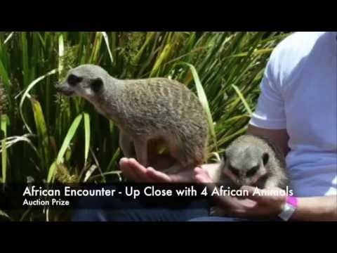 African Animal Encounter - Auction Prize